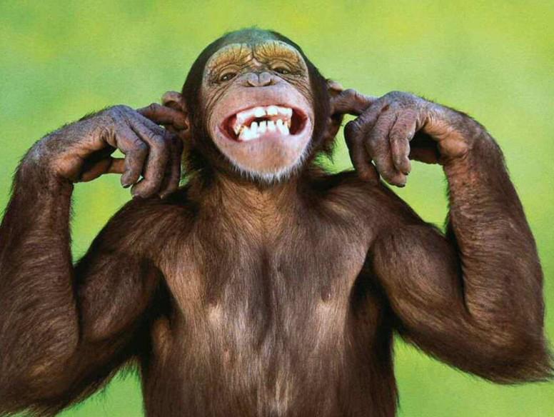 monkey_blocking_ears